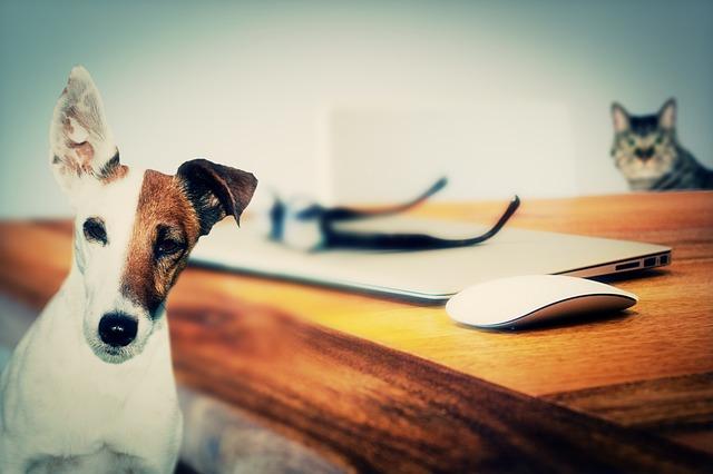 dog-624952_640