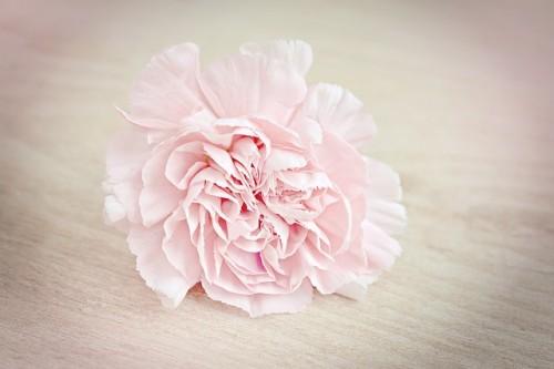 flower-1364746_640